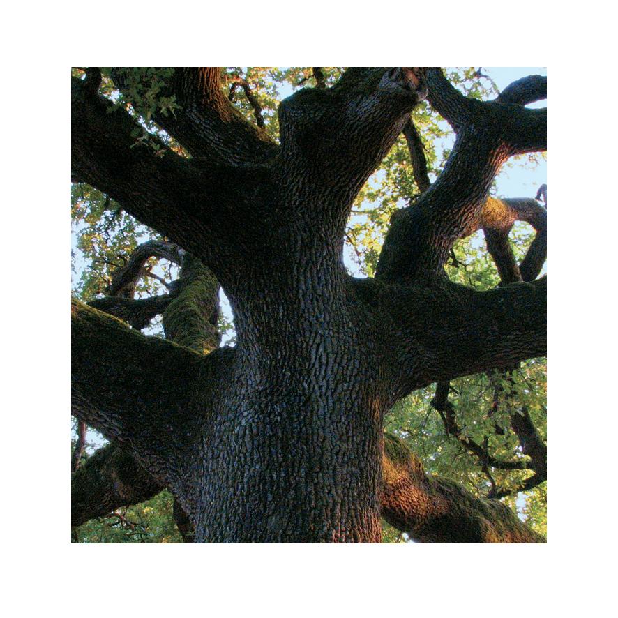 l-arbre-de-l-enfance